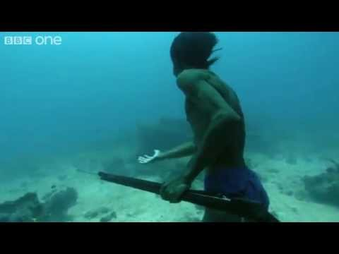 Sea Bed Hunting On One Breath - Human Planet  Oceans, preview - BBC One