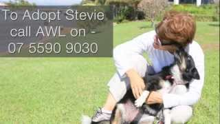 Stevie Is Looking For A New Home From The Awlq