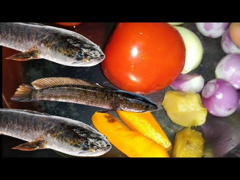Cara Masak Ikan Gabus Untuk Penyembuh4n Paska Operas1 Youtube