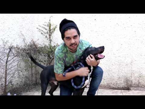 Como matar a un perro facil y rapido