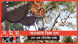 পুরো এলাকা জুড়ে ভোঁ ভোঁ শব্দ! | Bangladeshi Bees | Somoy TV