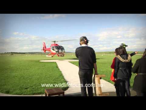 Wildlife Tours Australia Video:
