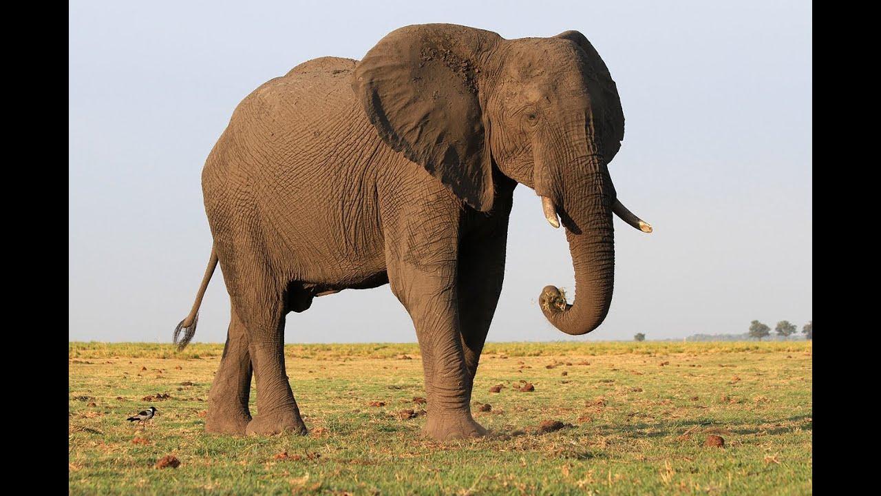 Botswana animals - YouTube