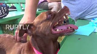 USA: Meet the world's ugliest dog - Zsa Zsa
