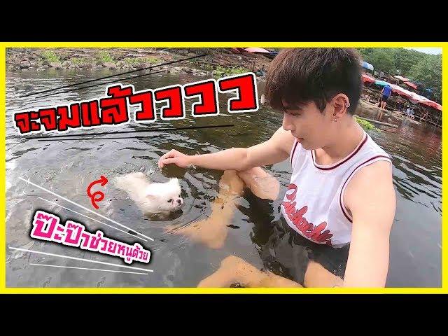 ดูแล้วจะยิ้มตาม ฮาๆ เมื่อลูกหมาสามตัวว่ายน้ำเล่นกลางธรรมชาติ!!  l ก็ผมมีลูกเป็นหมา EP.55