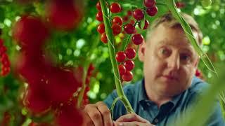 Co sprawia, że nasze pomidory są tak pyszne?