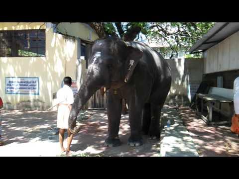 Thiruchendur Murugan temple elephant