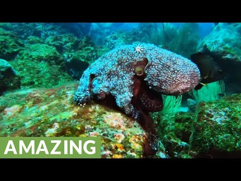 The mystery and wonder of the Galapagos Islands revealed