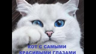 Кот с самыми красивыми глазами в мире Звездочка Коби