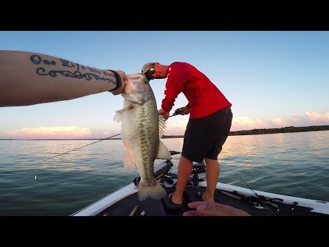 Video Bait for big catfish