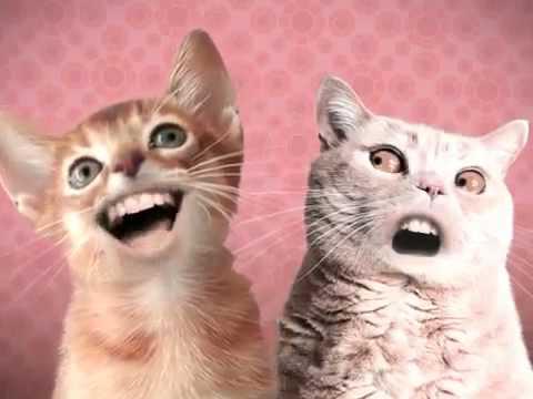 прикол с поющими котами - Ржачные видео приколы