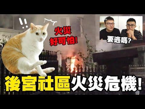 【後宮社區火災危機,好可怕!】志銘與狸貓閒聊