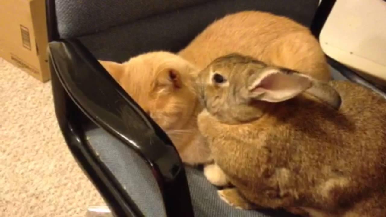 Cat Adopts Rabbit
