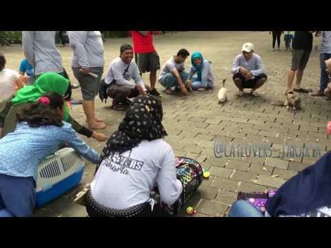 Komunitas Cat Lovers Jakarta