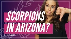Scorpions In Arizona | 5 Tips To Keep You Scorpion Free