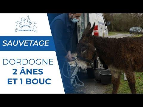 2 ânes et 1 bouc laissés sans soins recueillis par la Fondation Brigitte Bardot