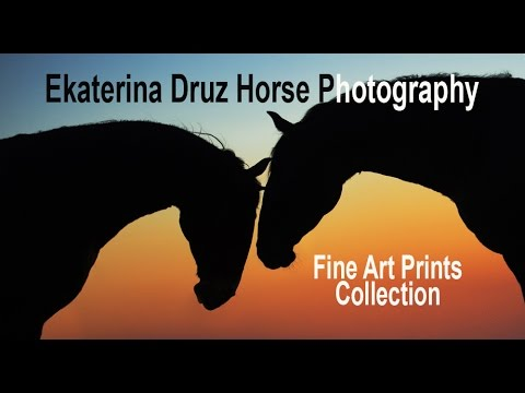 Gorgeous Horses by Katya Druz. Fine Art Prints Collection