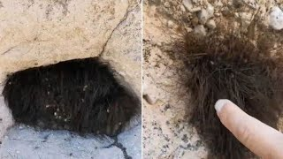Cute Furry Animal Turns Out to be Thousands of Spiders Nesting