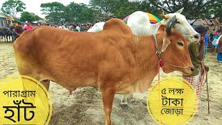 013 | Red and White Bolod Pair | Asking 5 lakhs | Village Haat | Paragram Diaries | ZbGH 2019