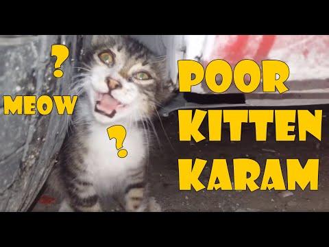 Poor Kitten Karam Under The Rain | Kitten Videos | Cute Kittens