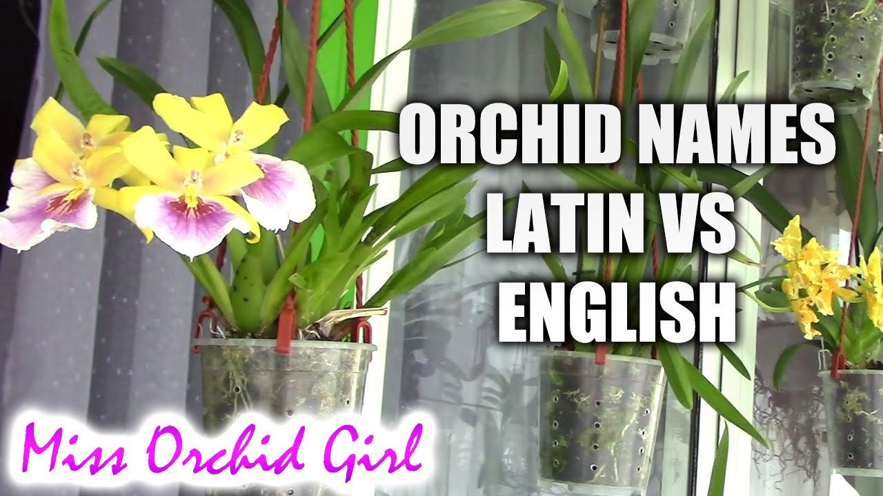 Reading orchid names - Latin vs. English on grape plant name, pink hydrangea plant name, christmas red plant name, heroin plant name,
