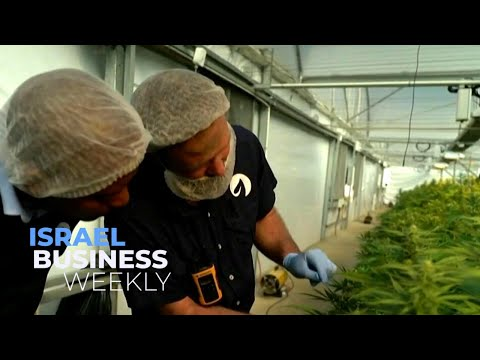 African Marijuana Boom Draws Israeli Investment