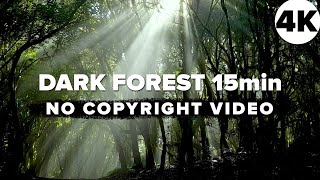 free-4k-dark-forest---nature-background
