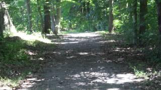 Walking through woods path (gravel) sound effect