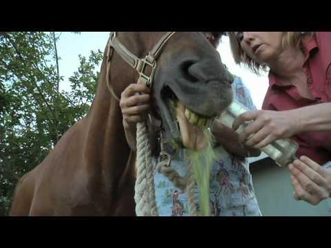 Dentistry in Horses