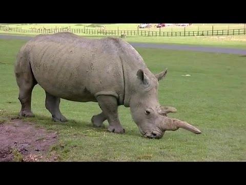 animal park s07e02