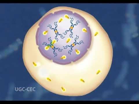 Cytogenetics, Chromosome painting, Fluorescent