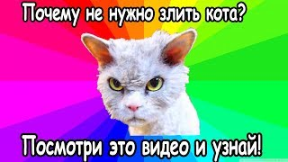 Почему не стоит дразнить  кота?  Смешные коты ругаются .Коты и кошки. Познавательное и смешное видео