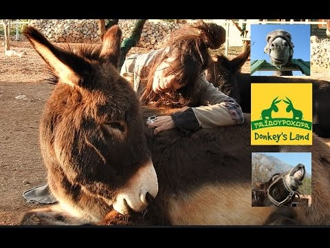 Donkey's World- a heaven on earth for a very under-appreciated animal
