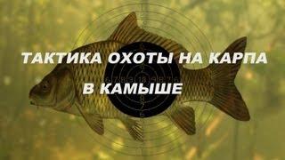 Тактика подводной охоты