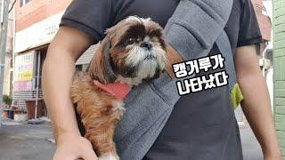 강아지가 귀여운 캥거루가 되었어요 시츄의 애견용품리뷰 …