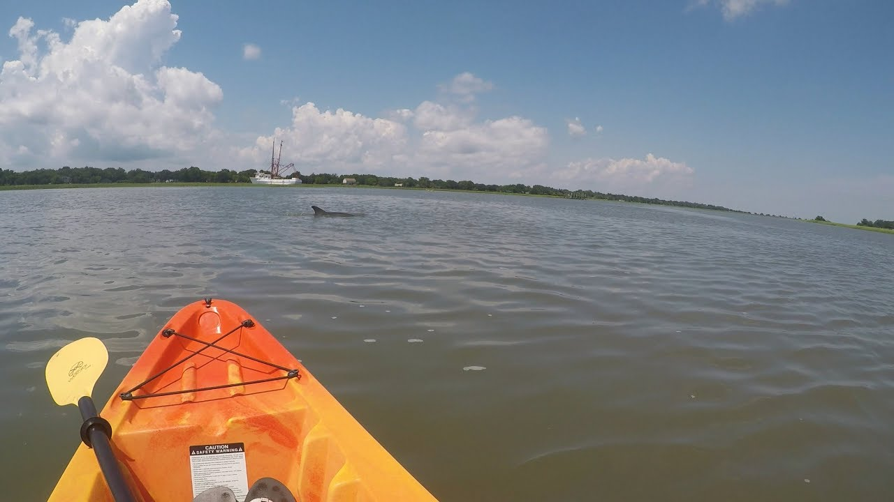 Kayaking With Dolphins Folly Beach Sc