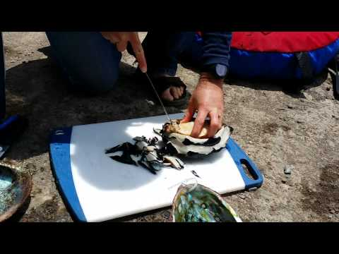 Step 1 of 3: Removing an Abalone from its Shell