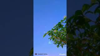 ❤ Pal Pal Dil Ke paas Tum Rahti Ho ❤    Whatsapp Romantic Love Song Status Video   BHARAT FAFAL