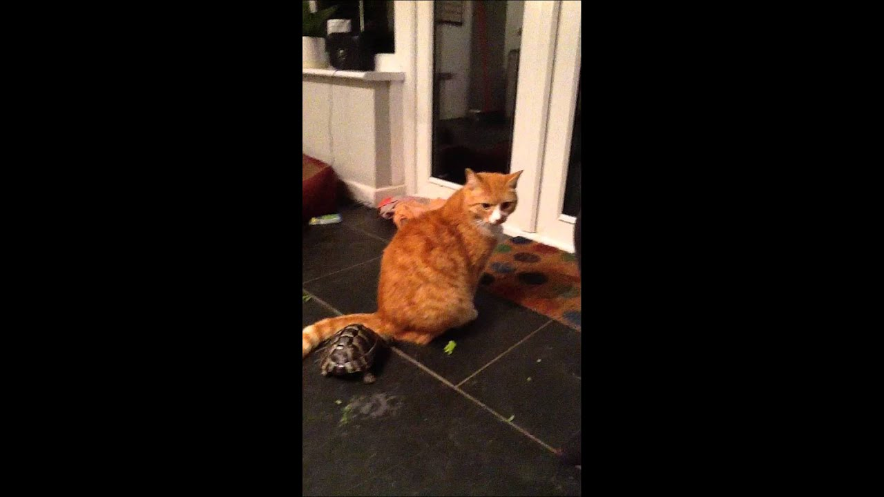 Tortoise Attacks Fred The Cat
