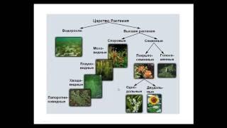🐟🐎🐵Что такое систематика и классификация живых существ. Введение.