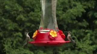 How To Set Up Your Hummingbird Feeder From Perky Pet - Ace Hardware