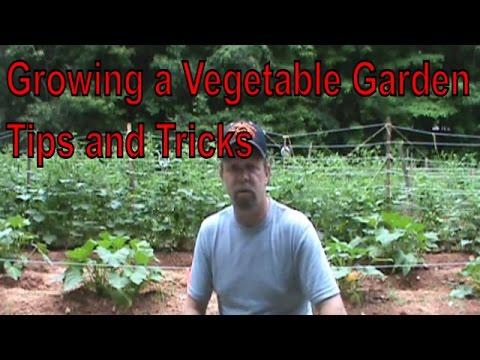 Growing A Vegetable Garden Update Tips U0026 Tricks June 30 2014