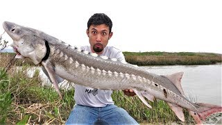 Once in a LIFETIME Catch and Cook!! White Sturgeon!!!