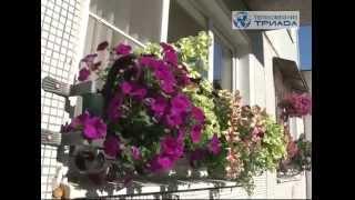 видео Цветущий балкон (лоджия)