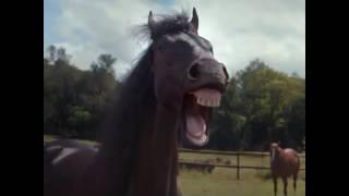 как лошади смеются