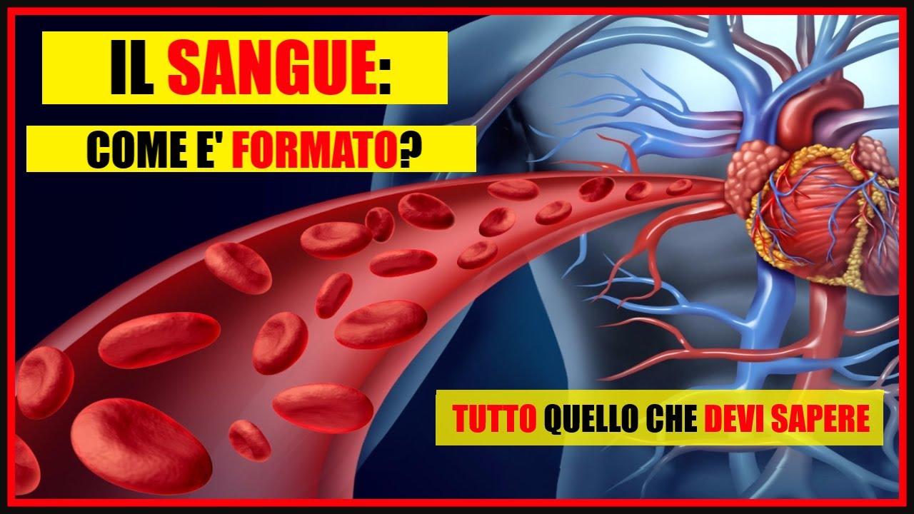Download Il Sangue: Cos'è e da quali cellule è composto? Globuli rossi, bianchi, piastrine e il plasma