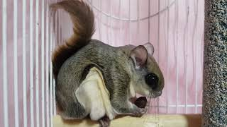 #하늘다람쥐 #따롱이 …