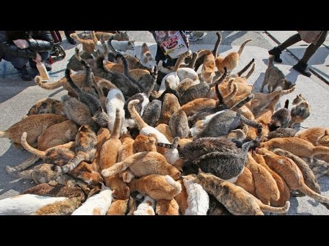 Thumbnail for Cat Video Japan's Cat Island - Incredible!