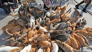 Japan's Cat Island - Incredible! thumbnail