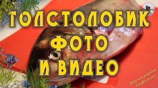 Толстолобик фото и видео от Petr de Cril'on & SonyKpK